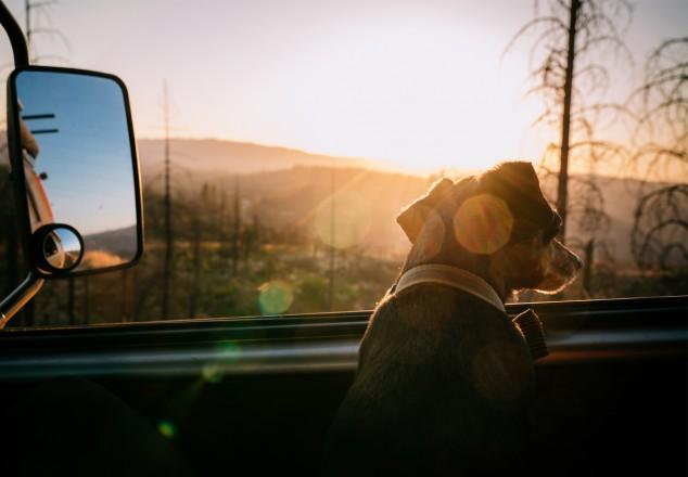 Josy Voyage - Voyager en van avec son animal